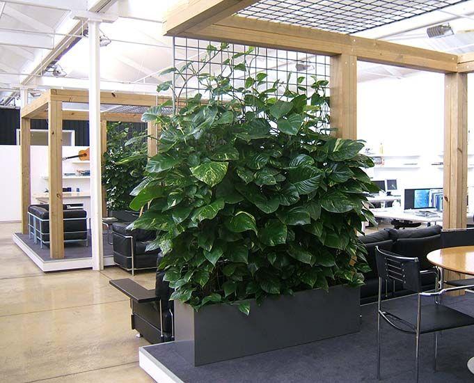 office greenery. Office-greenery-3 Office Greenery N