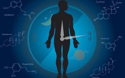 For maximum performance, follow your biological clock