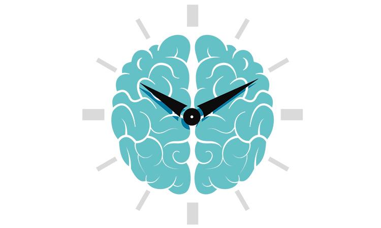 How your circadian rhythm works